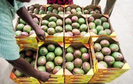 Sénégal : les exportations de produits agricoles ont généré environ 350 milliards de francs Cfa en 2015 | Questions de développement ... | Scoop.it