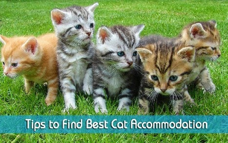 Finding the Best Cat Accommodation | Pampered Puss | Scoop.it