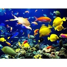 Underwater World in Pattaya | Discover amazing Thailand | Scoop.it
