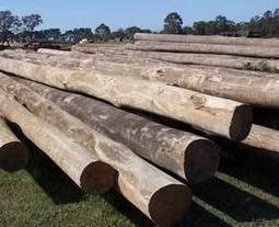 Timber logs, poles and piles for your home   Timber and Paving Supply   Scoop.it