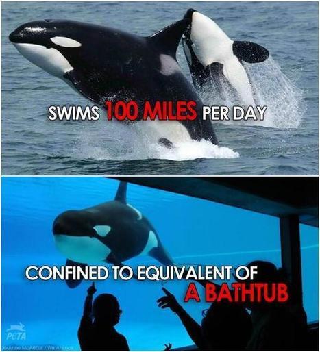 Twitter / peta: Reason 1,000,000 to ... | DEATH AT SEA WORLD | Scoop.it