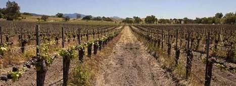 California Wine Threatened by Drought Crisis   Vitabella Wine Daily Gossip   Scoop.it