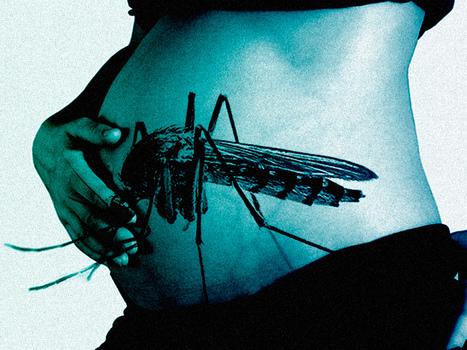 Création d'un registre international des femmes enceintes exposées à Zika | EntomoNews | Scoop.it