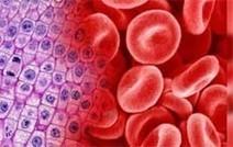 Científicos estudian transformar células de la piel en células del ... - Madridpress.com | Fisiología y morfología de la célula | Scoop.it