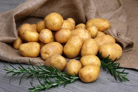 Vous voulez maigrir ? Mangez des pommes de terre ! | Régime alimentaire | Scoop.it