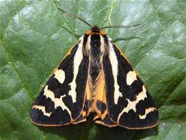 Mundo de Insectos: El lenguaje de las mariposas   cuidomihuerto   Scoop.it