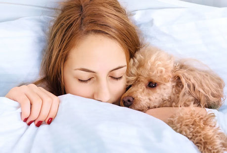 Pets In Bed: Study Reveals If It Helps or Hurts Sleep - PsyBlog   labyrinth   Scoop.it