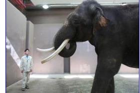 Elephant Speak: Koshik Mimics Korean | Animals R Us | Scoop.it