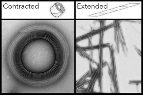 New 'nanoneedles' puncture cell membrane to release payload on command. | SynBioFromLeukipposInstitute | Scoop.it