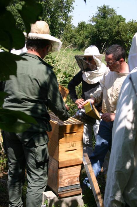 Il faut sauver l'abeille noire - Le Perche | Le jardin stagirite | Scoop.it