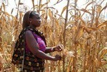 WMO and UNCCD work on the foundations to build national drought policies - News - Professional Resources - PreventionWeb.net | Agriculture and Climate Change | Scoop.it
