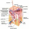 Skin Treatment Boca Raton-UA1