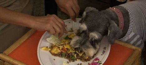 A quelle fréquence vermifuger un chien ? | CaniCatNews-santé | Scoop.it