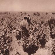 La cuvée Mailhol du domaine Henry : le goût du vin d'autrefois | Winemak-in | Scoop.it