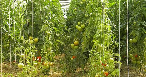 Fruits et légumes en circuit court type AMAP les moins chers du marché | Des 4 coins du monde | Scoop.it