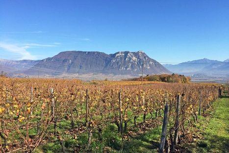 Savoie : la Route des vins de France   IRWT - Vins de Savoie & du Bugey   Scoop.it