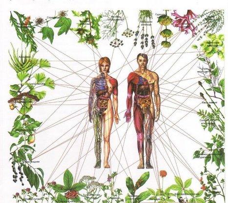 Guérir les sept chakras avec des herbes | Cette nature qui nous soigne | Scoop.it