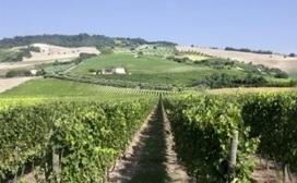 Fazi Battaglia: since 1949, quality wines from Le Marche | Wines and People | Scoop.it