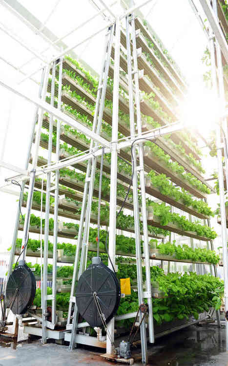 Vertical Farming vs. Farming Vertically - Vertical Food Blog | Vertical Aquaponics | Scoop.it