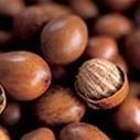 Savanna Plantations to nurse one million shea seedlings ... | Food and Drink multinationals | Scoop.it