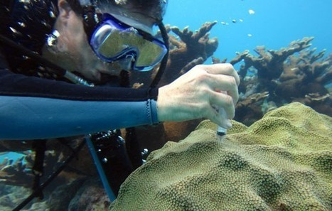 The microbiologist: Tweaking genes to help corals survive climate change — The Daily Climate | Viruses and Bioinformatics from Virology.uvic.ca | Scoop.it