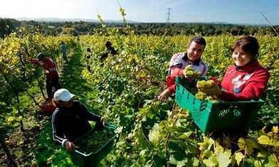 Migrant jobs squeeze alarms UK fruit farmers | cmi Unit 5007 Financial Control | Scoop.it