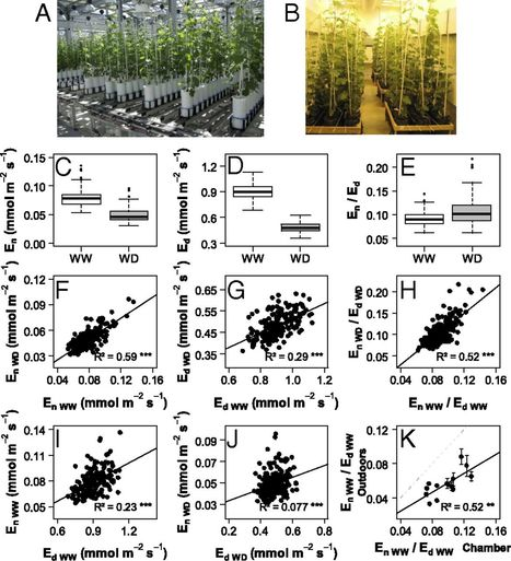 Reduced nighttime transpiration is a relevant breeding target for high water-use efficiency in grapevine | Emerging Research in Plant Cell Biology | Scoop.it