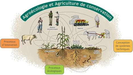 PEPITES Capitaliser et transmettre des savoirs agroécologiques   AGRONOMIE VEGETAL   Scoop.it