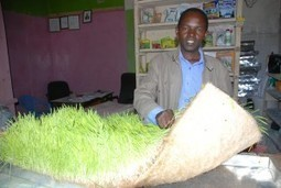 Kenya's hydroponic fodder initiator - Fountain News | Vertical Farm - Food Factory | Scoop.it