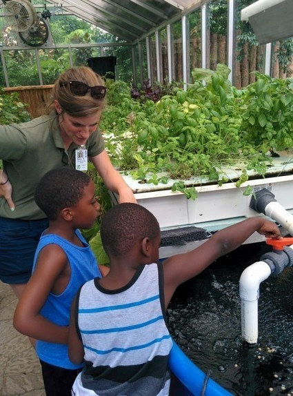 Lessons Learned from a Year of Aquaponics | Cincinnati Zoo Blog | Farming | Scoop.it
