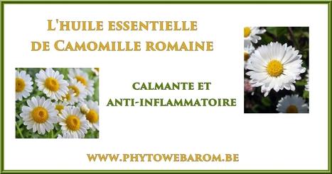 Camomille romaine: calmante et anti-inflammatoire - Mon aromathérapie | Huiles essentielles HE | Scoop.it