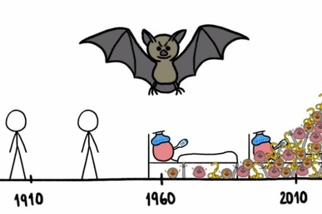 WATCH: Why do Bats Transmit so many Diseases like Ebola ... | Bat Biology and Ecology | Scoop.it