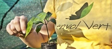 Envol vert veut protéger la forêt | developpement durable | Scoop.it