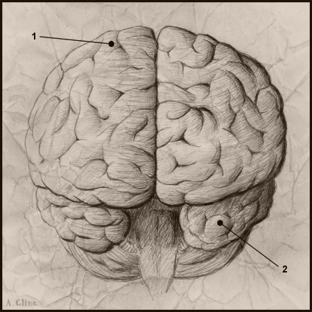 Fooling The Human Brain | Winarticles | Scoop.it