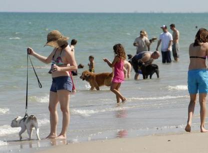 Dog beaches stir debate in shoreline communities   Explore Pawleys Island   Scoop.it