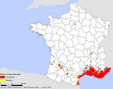 « Moustique tigre » - Il y a carte et carte | Variétés entomologiques | Scoop.it