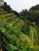 Il vino delle Cinque Terre, sospeso tra cielo e mare - Into the Wine   Into the Wine   Scoop.it