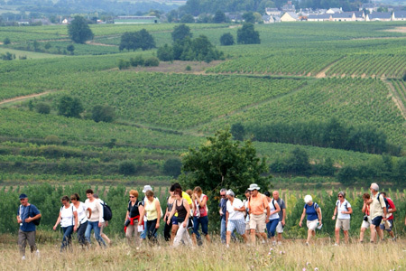 Val de Loire : 8 000 marcheurs attendus | Viticulture | Scoop.it