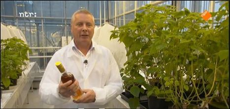 Sander van der Krol in a TV item about classical music and wine (only in Dutch) | Laboratory of Plant Physiology, WUR | Scoop.it