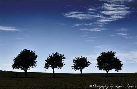 Apfelbäume | kostenlose-Bilder | Scoop.it