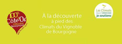 L'application mobile Bourgogne Rando Vignes | Tourisme mobile | Scoop.it