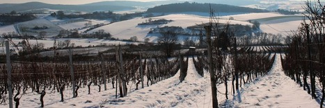 Lallemand Œnologie Sponsor du 9ème International Cool Climate Wine Symposium (ICCWS) | Latests news in Wine Fermentation | Scoop.it