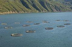 How Norway Avoids Antibiotics in Aquaculture | ASEM Aquaculture Health | Scoop.it