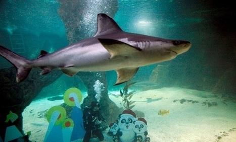 Las matemáticas explican la perfección nadando del tiburón | matematica | Scoop.it