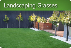 Synthetic Grass NZ | Super Turf & Sports | Synthetic Grass NZ | Scoop.it