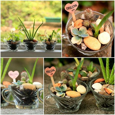 Mini succulent gardens in vintage glasses | oskreddy | Scoop.it
