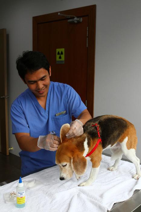 Mount Pleasant Vet Center Lists Out Symptoms of Pet Illnesses   Mount Pleasant Vet   Scoop.it