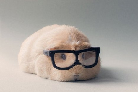 Meet Booboo (Guinea Pig) And His Friends | Animals | Scoop.it