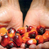 Alimentation, agriculture, bio