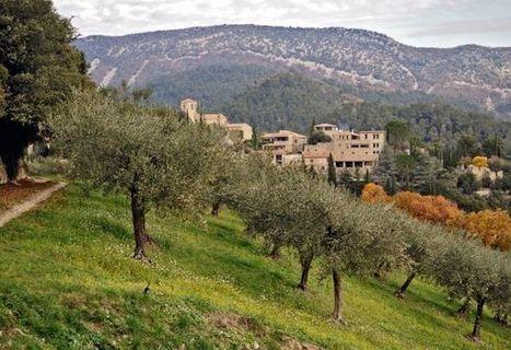 2014 : une année mémorable pour l'olive de Nyons - Escapada.ch | oléiculture | Scoop.it